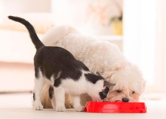 6-pet-food